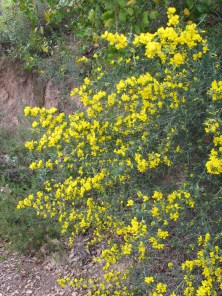 wildflowers-yellow1