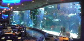 kids might enjoy dining with the fish at Aquarium