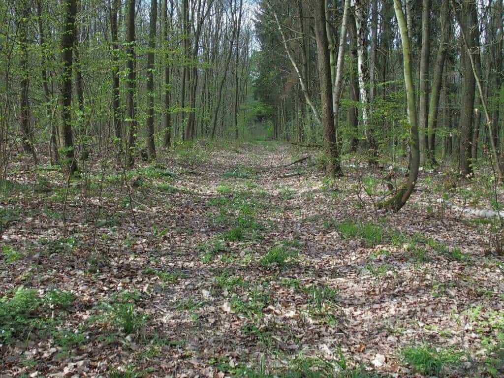 Forest path, Germany (2014-04)