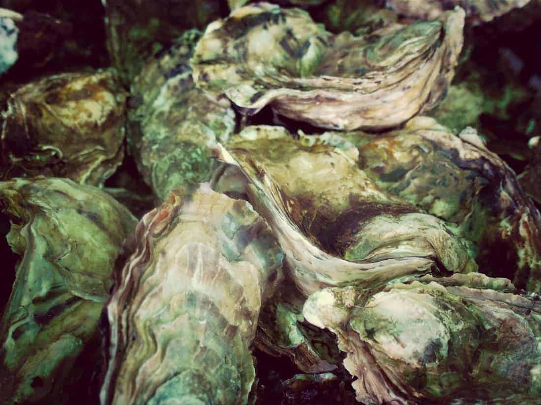 Oysters in La Tremblade, Charente-Maritime, FR (2014-08-22)
