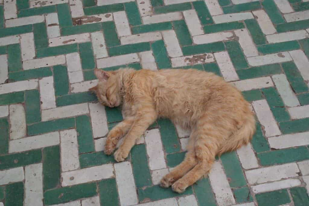 Red cat sleeping on a green and white tile floor, Marrakesh, Morocco (2011-10)