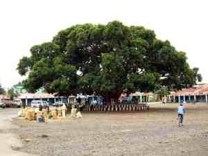 Girls selling tef under a big tree in Axum, Ethiopia (2012-06)