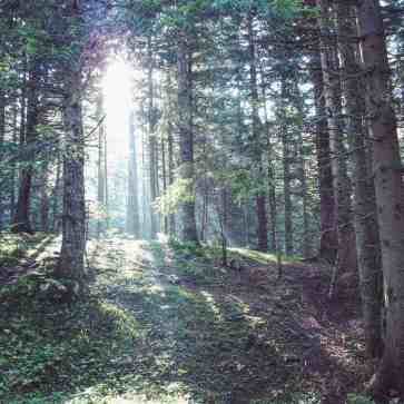 Morning light in the forest near Black Lake in Durmitor National Park, Montenegro (2016-09-25)