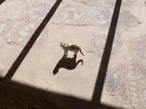 Cat on Byzanthine mosaics in Madaba, Jordan (2016-12-20)