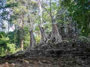 Trees on ruins inside the royal compound, Angkor Thom, Siem Reap, Cambodia (2017-04-13)