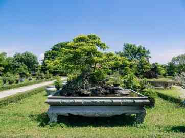 Big bonsai tree in Co Ha gardens, Hue Citadel, Vietnam (2017-06)