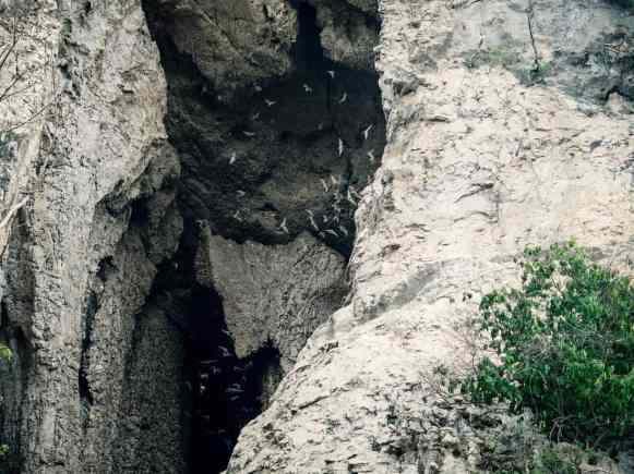 Bat Cave at Phnom Sampov, Battambang, Cambodia (2017-04)