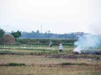 Rice field with farmers, fire, and ducks, Hoi An, Vietnam (2017-05/06)