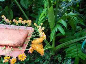 Kuang Si Butterfly Park, Luang Prabang, Laos (2017-08)