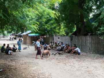 Cock fight in a side street of Mingun, Mandalay, Myanmar (2017-09)