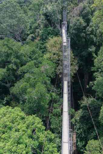 Belalong Canopy Walk in Ulu Temburong National Park, Brunei