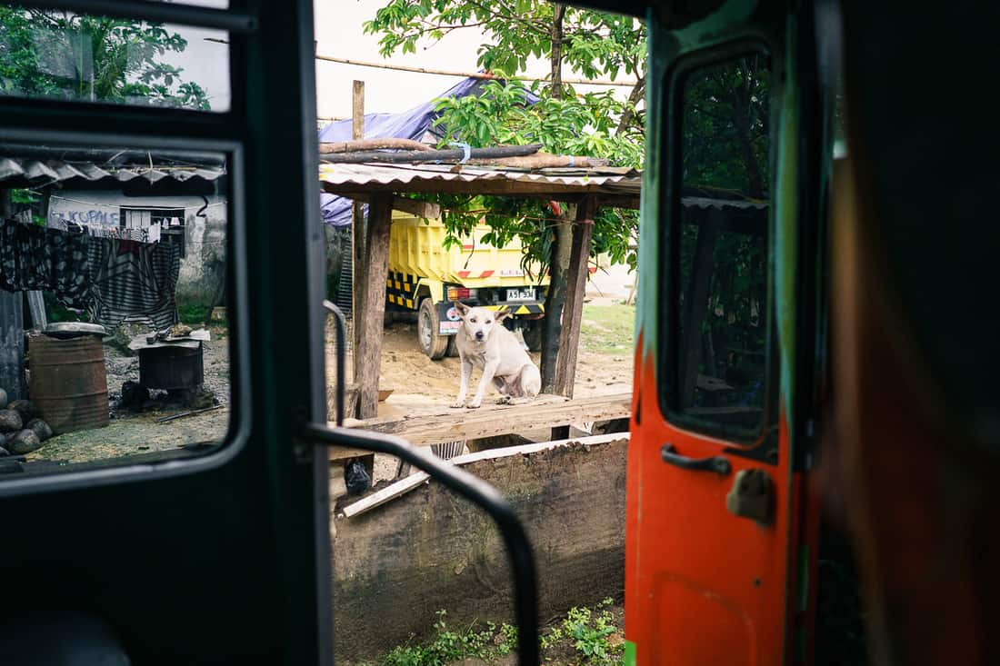 View of a dog from the bus while cruising through Lospalos, East Timor