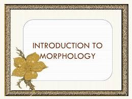 Discuss Breifly Morphology Linguistics Concept