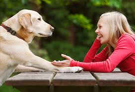 What Human Language And Animal communication Do?