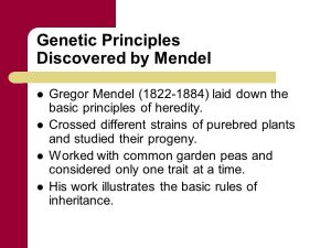 Great Principles of Genetics,Complete Guide About Mendelian Genetics