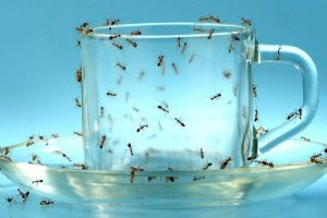 How To Get Rid of Ants In Your House;Proven Method