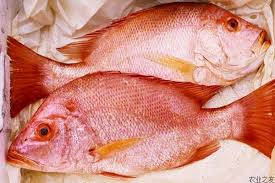 What Is Fish Poisoning;Symptoms,Diagnosis And Treatment