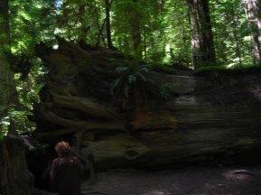 Mom-in-law near fallen redwood tree