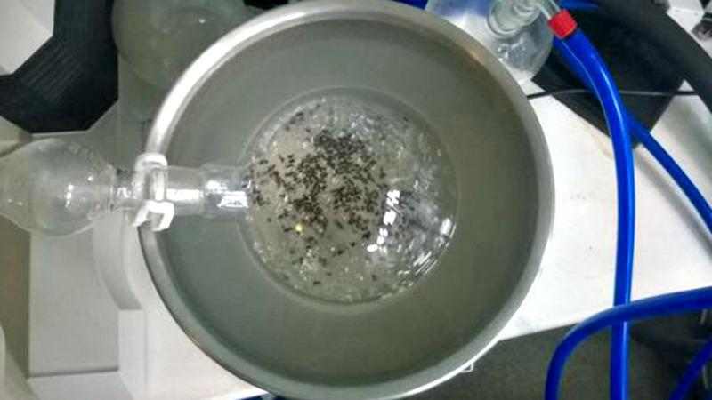 hormigas en alcohol