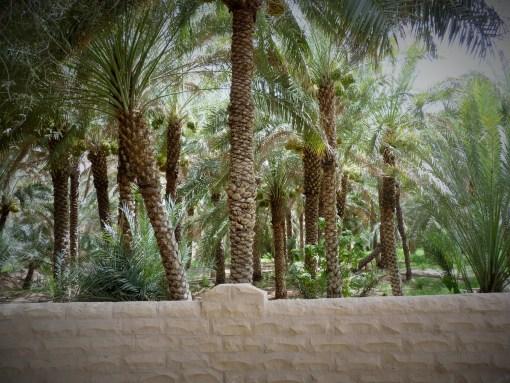 Al Qattara Oasis - Al Ain