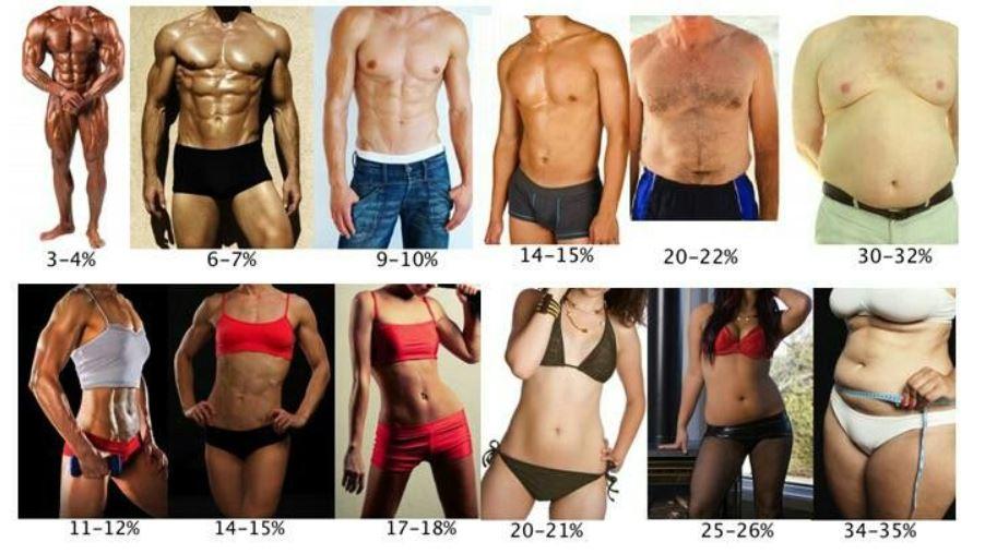 bodyfat percentage examples