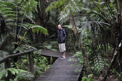 Waitangi Treaty House forest boardwalk