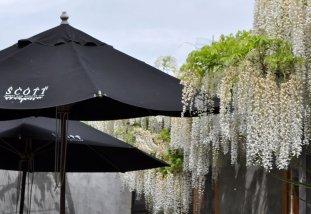 Allan Scott estate gardens