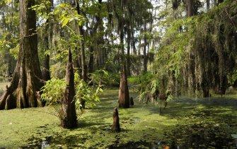 cajun swamp tour 4