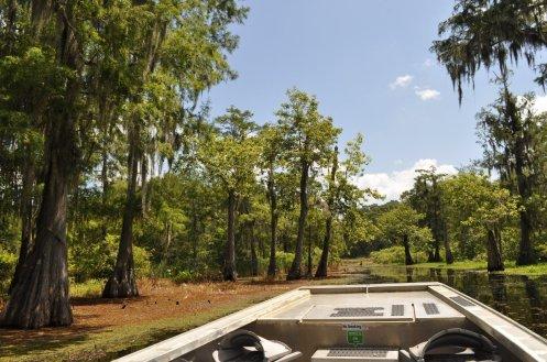 cajun swamp tour 8