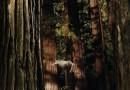Woodshock Posterized And Trailerized
