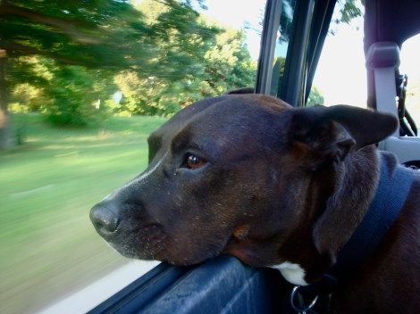Mya enjoys a ride in the Jeep with the top down.