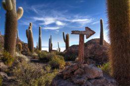 cactus-signs