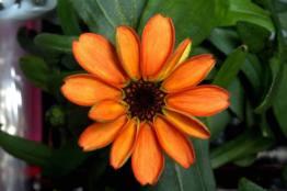 space-flowers