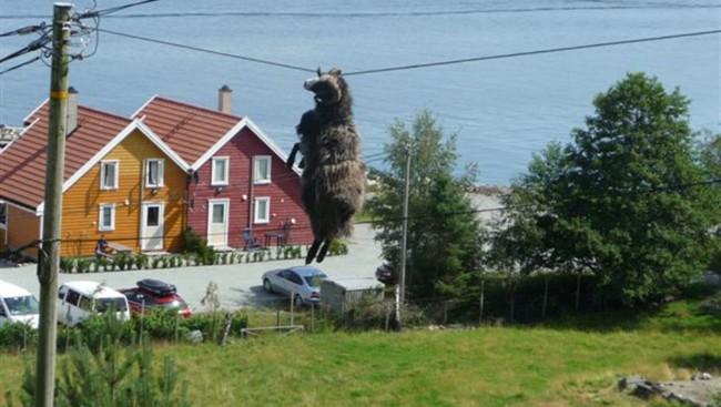 Norwegian Sheeps hanging around