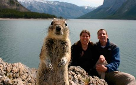 Squirrel shows up on holiday photo after self timer catches it.