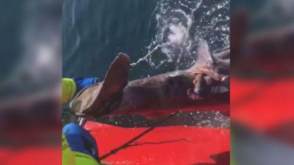 Islandia,  pescadores despedidos luego de mutilar un tiburón