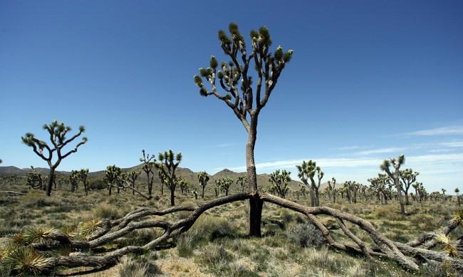 Parque Nacional de EE.UU. tardará 300 años en recuperarse de los daños provocados por el cierre del gobierno