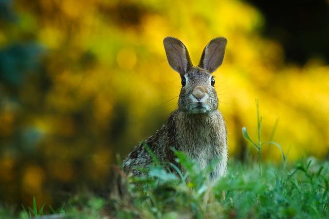 La enfermedad de los conejos muta letalmente