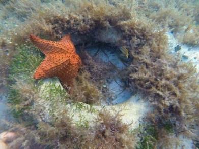 X_N5 Playa Langosta (11)