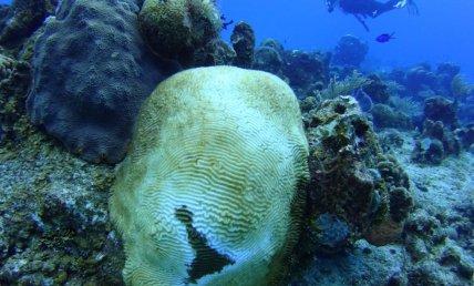 Corales1 (1)