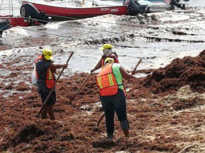 Recalan más de 40 toneladas de alga roja en playas de Solidaridad