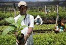 Governo anuncia mais de R$ 900 mil para agricultura familiar da região de Juazeiro