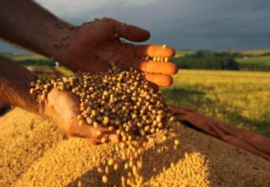 Produção de soja deve cair mais de 20% em 2019