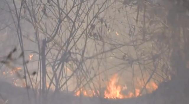 Teixeira de Freitas tem 155 incêndios em vegetação em menos de 3 meses; número é 5 vezes maior que em 2017