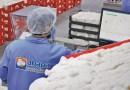 Laboratório de Análise de Fibras da Abapa atinge marca inédita de três milhões de amostras analisadas, em uma só safra