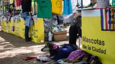 Photo of Mañana habrá atención gratuita a mascotas