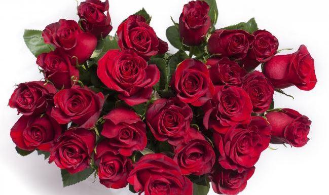 rosas san valentin