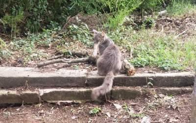 Anuncian 'Michiton' en beneficio de gatitos de Xalapa 2000