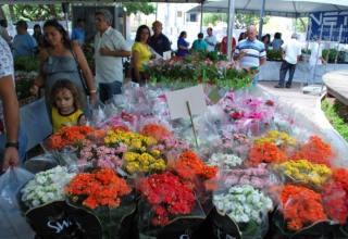 XI Festival das Flores de Holambra chega ao Cariri