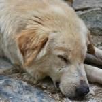 Proponen hasta seis años de cárcel a quien abandone, maltrate, mutile o cause la muerte de animales de compañía 4
